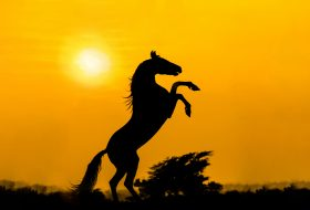 7 essential tips to take amazing silhouette photo's